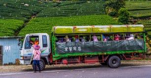 Taiwanese Theegebieden Stock Afbeeldingen