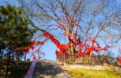 Taiyuan scene-Prayer trees of Kaihuo temple Stock Photo