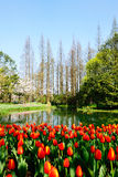 taizhiwan公园 库存图片