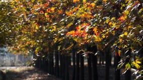 Taizhou jesieni sceneria zdjęcie royalty free