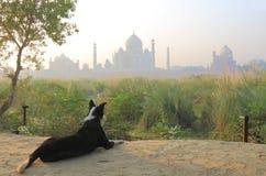 taj agra Индии mahal Стоковая Фотография