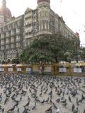 Taj hotell Royaltyfria Foton