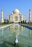 Taj Mahal,印度 库存图片