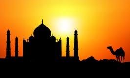 Taj Mahal & camelo ilustração royalty free