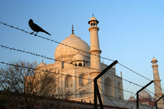 Taj Mahal behind barbed wire Stock Images