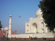 Taj Mahal with Bird Royalty Free Stock Image