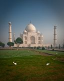 Taj Mahal with birds Stock Photos