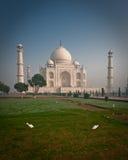 Taj Mahal with birds Stock Photos