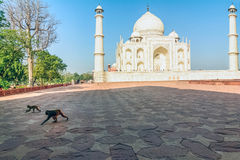 Taj Mahal, blauer Himmel, Reise nach Indien Stockfotos