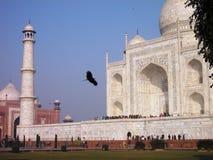 Taj Mahal con l'uccello Fotografia Stock Libera da Diritti