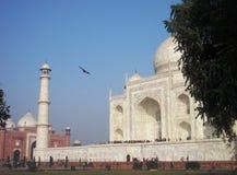 Taj Mahal con l'uccello Immagine Stock Libera da Diritti