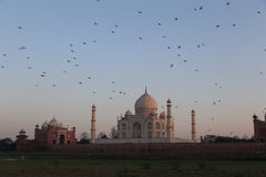 Taj Mahal at dawn Royalty Free Stock Photography
