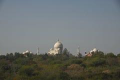 Taj Mahal door de bomen, Agra, India wordt gezien dat Royalty-vrije Stock Foto