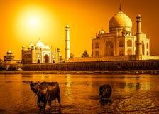 Taj Mahal et la rivière image stock