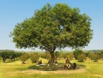 Taj Mahal Guards en la sombra de un árbol Fotos de archivo libres de regalías