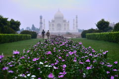 Taj-Mahal mausoleum. A view on Taj-Mahal mausoleum through flowers Royalty Free Stock Photography