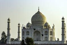 Taj Mahal med flygravens - Agra, Uttar Pradesh, Indien royaltyfria bilder