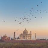 Taj Mahal med solnedgång och att flyga för fåglar Arkivbilder