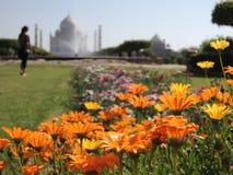 Taj Mahal na névoa vista de um jardim com flores Imagens de Stock