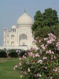 Taj Mahal and oleander Royalty Free Stock Image
