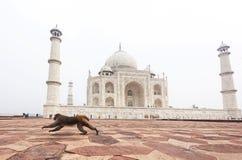 Taj Mahal Palace i Agra Arkivfoto