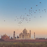 Taj Mahal with sunset and birds flying Stock Images