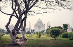Taj Mahal and trees in Mehtab Bagh garden Stock Photo