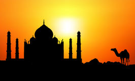 Taj Mahal u. Kamel lizenzfreie abbildung