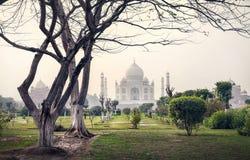 Taj Mahal und Bäume in Garten Mehtab Bagh stockfoto