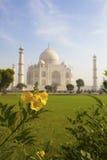 Taj Mahal und eine recht gelbe Blume. Stockfotos