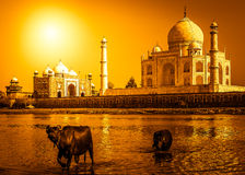 Taj Mahal y el río Imagen de archivo