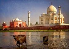 Taj Mahal y el río Fotos de archivo libres de regalías