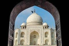 Taj Mahal y paloma Fotos de archivo libres de regalías