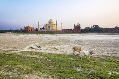 Taj mahal from yamuna river Royalty Free Stock Photo