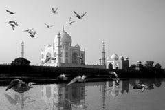 Taj Mahal in Yamuna-Riviermening wordt weerspiegeld met vogel die overdwars vliegen die stock afbeeldingen