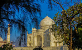 The Taj seen Through Trees. The Light Golden Yellow Hues  of the sun on the Taj as seen here, framed by trees on either side on a winter morning with a clear Stock Image