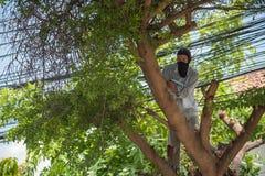 Tajada reducida un árbol para la seguridad y la ordenanza del pozo Imagen de archivo