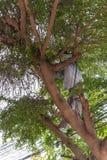 Tajada reducida un árbol para la seguridad y la ordenanza del pozo Imágenes de archivo libres de regalías