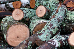 Tajado abajo de árbol con el musgo Imagen de archivo libre de regalías