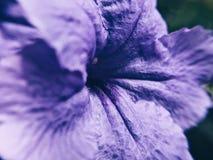 Tajemnica kwiat Obraz Royalty Free