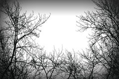 Tajemnicy drzewa silhoutte Zdjęcia Royalty Free