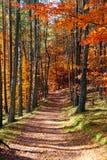 Tajemnicza łata zakrywająca jesień liśćmi Zdjęcie Stock