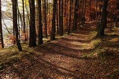 Tajemnicza łata zakrywająca jesień liśćmi Zdjęcia Stock