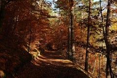 Tajemnicza łata zakrywająca jesień liśćmi Obrazy Stock