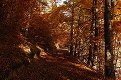 Tajemnicza łata zakrywająca jesień liśćmi Zdjęcie Royalty Free