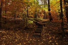 Tajemnicza łata zakrywająca jesień liśćmi Obraz Stock