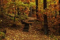 Tajemnicza łata zakrywająca jesień liśćmi Obrazy Royalty Free