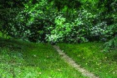 Tajemnicza ścieżka las zdjęcie stock
