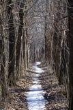 Tajemnicza aleja w suchym lesie Fotografia Royalty Free