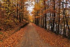 Tajemnicza droga zakrywająca jesień liśćmi Obrazy Stock